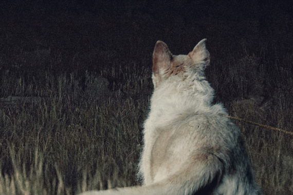 IT COMES AT NIGHT: An Atmospheric, Disturbing Tale Of Paranoia