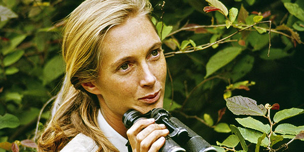 Chimps, Oscar Snubs & Favorite Films With Dr. Jane Goodall