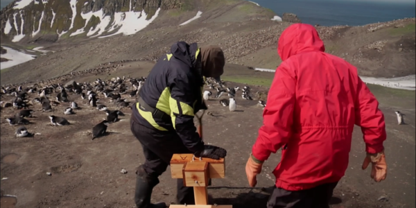 THE PENGUIN COUNTERS: A Persnickety Penguin Story